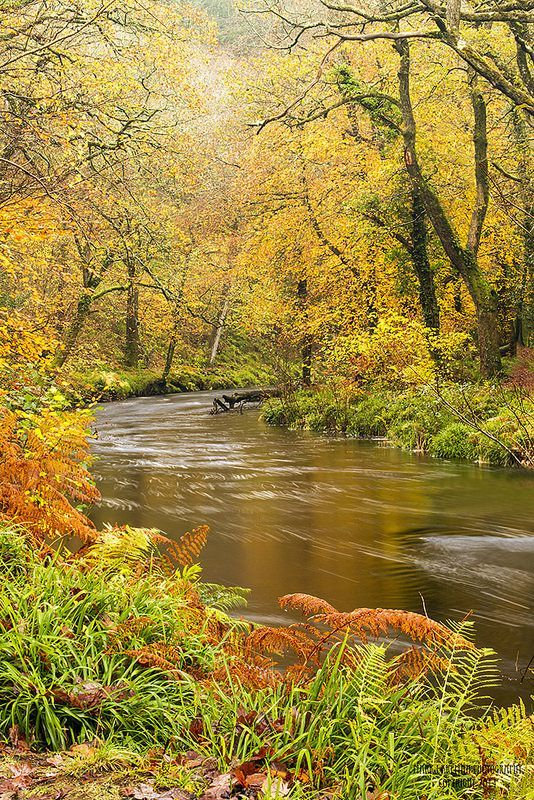 Autumn - Dartmoor National Park, England. Love this rushing autumn river