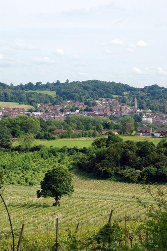 Denbies Vineyard, Dorking, England