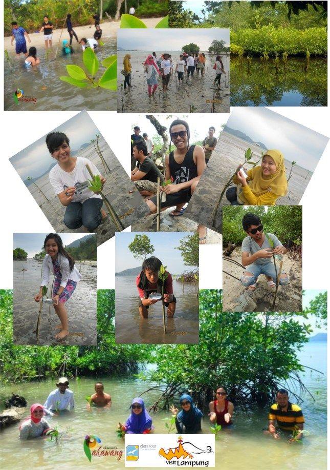 EkoWisata Pahawang, Aksi Para Pahlawan Lingkungan ...
