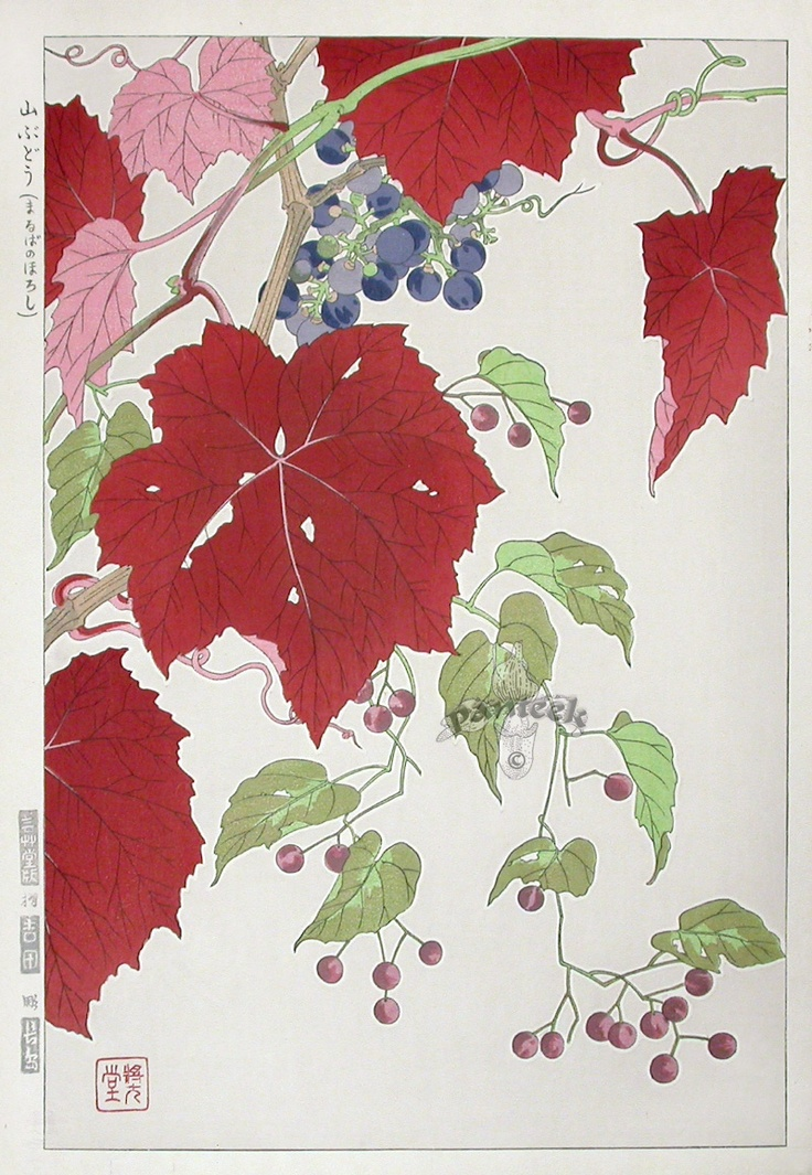 Shodo Kawarazaki, Grapes