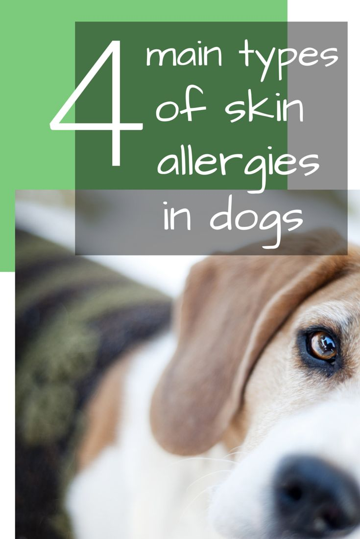 Allergies in dogs, Allergies and Dog skin allergies on ...