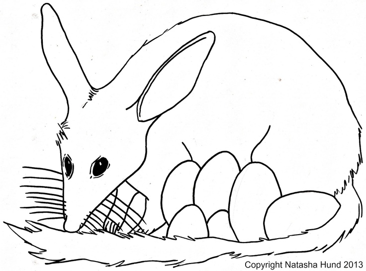 playfulljoy: Australian Easter Bilby coloring in page