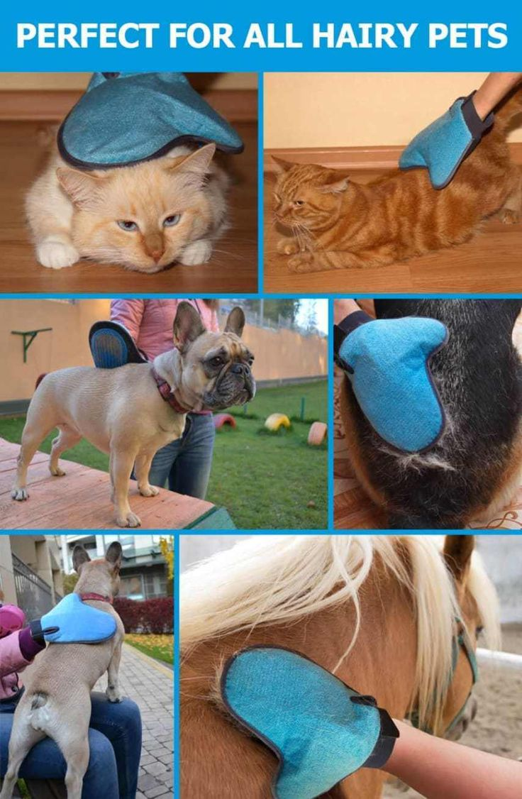 25 Best Ideas About Dog Hair Removal On Pinterest