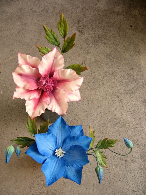 Clematis Gumpste flowers