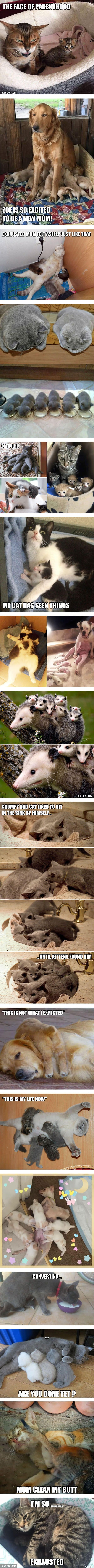 We've All been there. - Animal Expressions That Perfectly Sum Up What It's Like To Be A Parent