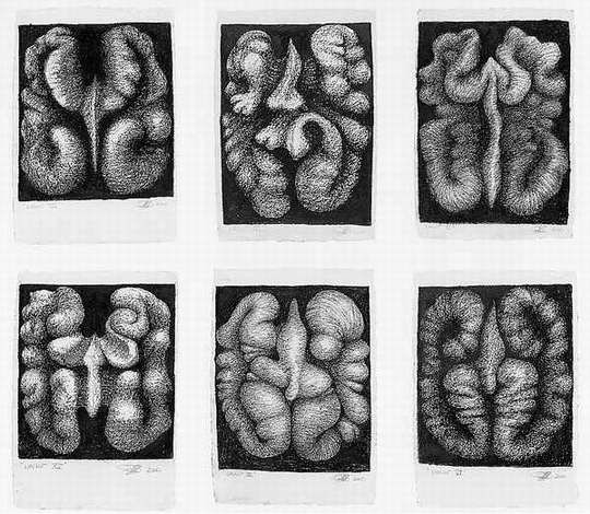 Peter Randall-Page, Individual Exhibitions, 2000 'Walnut Drawings'