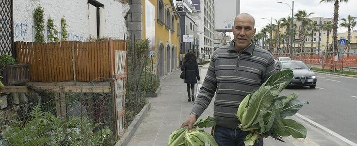 """Lavoro Napoli - Mustafa agricoltore in via Marina: """"Il mio orto urbano in mezzo al caos""""  Originario di Marrakech non ha un lavoro e così coltiva due aiuole  #Curriculum #campanialavoro #lavorosud #lavoronapoli #offertedilavoro #napoli #napolilavoro"""