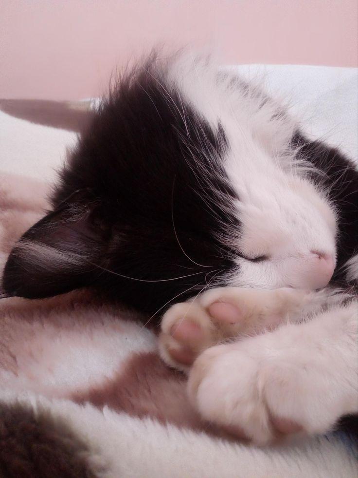 #Lukas #cat
