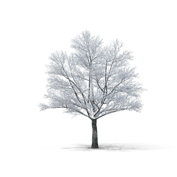 Bare Tree Covered In Snow Png Psd Images Bare Tree Snow Tree Deciduous Trees