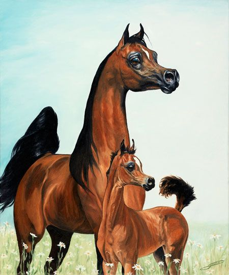 Bay arab mare and foal.