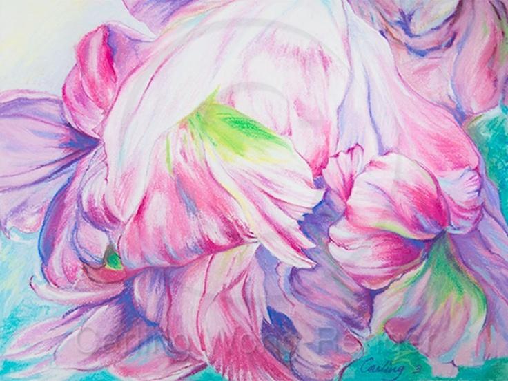 April Parrot Tulip | Carling Wong-Renger