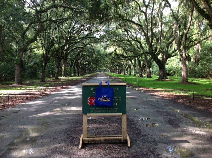 RUN FORREST RUN. Our Blue Bag stopped to admire the oak canopies where Forrest Gump ran so fast his leg braces flew off.
