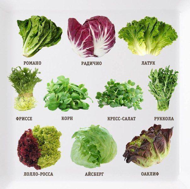 Поговорим о салатах! О свойствах, вкусе и не только...