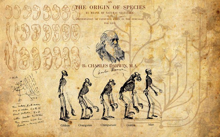 10. Los mecanismos que explican la transformación y diversificación de las especies, en cambio, se hallan todavía bajo intensa investigación científica. Actualmente, la teoría de la evolución combina las propuestas de Darwin y Wallace con las leyes de Mendel y otros avances posteriores en la genética.