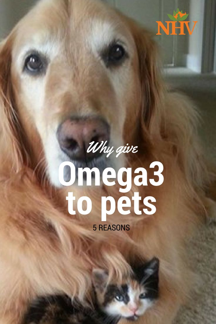 Cancer herbs for dogs - The Top Therapeutic Uses Of Omega 3 Fatty Acids For Pets