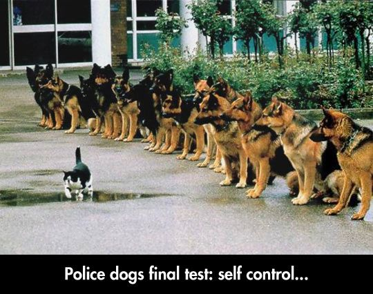 funny-police-dog-cat-line-looking