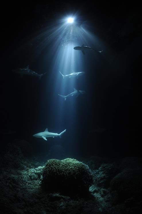 A beautiful image of sharks