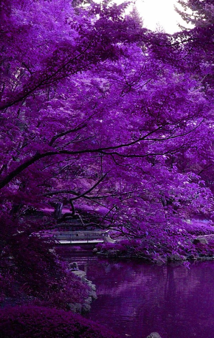 Since I love purple, of coure .Purple Trees and Water would be a relaxation fantasy♡