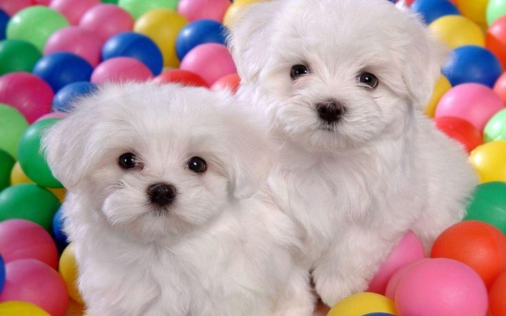 Puppies Free HD Wallpapers and Backgrounds Download (15)  Puppies Free HD Wallpapers and Backgrounds Download (15) http://www.urdunewtrend.com/hd-wallpapers/animal/puppies/puppies-free-hd-wallpapers-and-backgrounds-download-15/ Puppies 10] 10K 12 rabi ul awal 12 Rabi ul Awal HD Wallpapers 12 Rabi ul Awwal Celebration 3D 12 Rabi ul Awwal Images Pictures HD Wallpapers 12 Rabi ul Awwal Pictures HD Wallpapers 12 Rabi ul Awwal Wallpapers Images HD Pictures 19201080 12 Rabi ul Awwal Desktop HD…