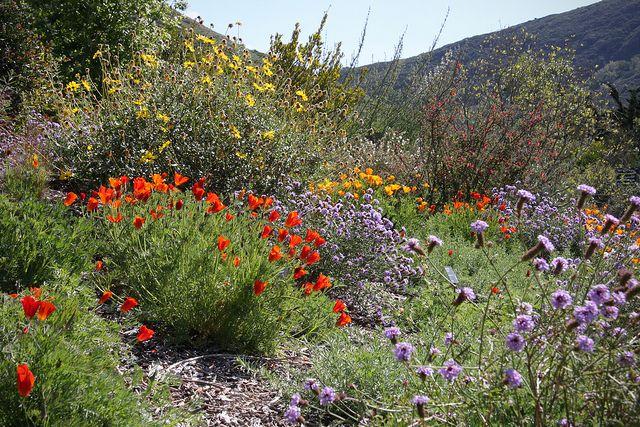 Leaning Pine Arboretum - California Native Landscape | Flickr - Photo Sharing!