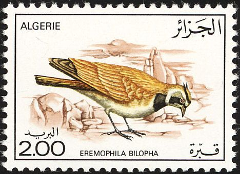 Argelia-Alondra Sahariana