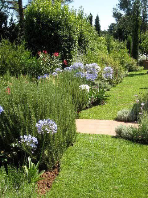Fiori aglio e rosmarino giardino mediterraneo - Progetto giardino mediterraneo ...