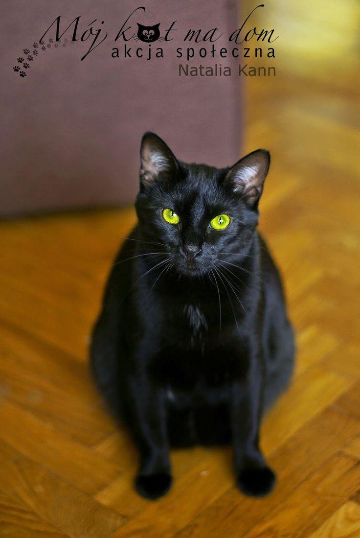 Mój kot ma dom - Akcja społeczna: IV.040