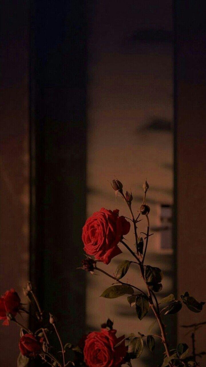 Walpaper Bunga Ilustrasi Alam Pemandangan Abstrak Foto Abstrak
