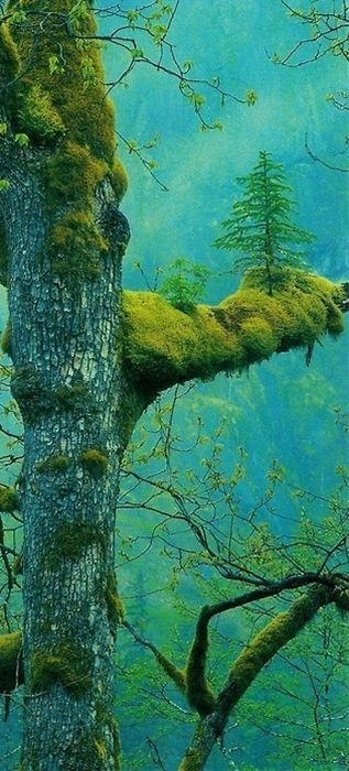 Tree Stories ... Against all odds <3     i wonder how long till the trees outgrow the load bearing limit of the branch...