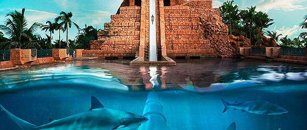 Resort nas Bahamas tem toboágua que passa por piscina cheia de tubarões