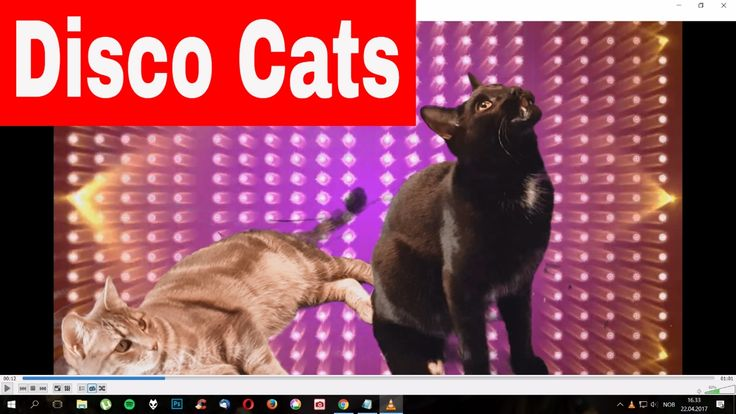 Disco Cats - Singing And Dancing
