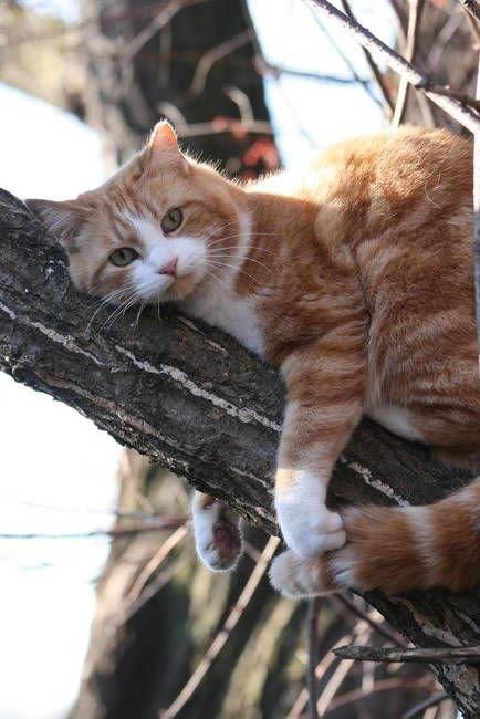 Orange & white cat in tree