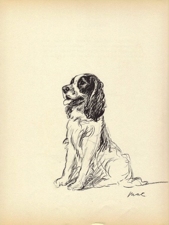 SPANIEL -1930s Vintage Dog Print,  Lucy Dawson, Wall Home Decor, Cocker Spaniel, Art Illustration to Frame, plate, black & white