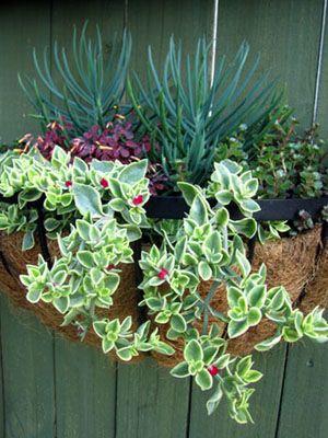 24 Succulent Container Gardens - Armstrong Garden Centers