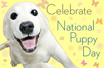 Celebrate National Puppy Day With These Five Fun Videos! | The Animal Rescue Site Blog