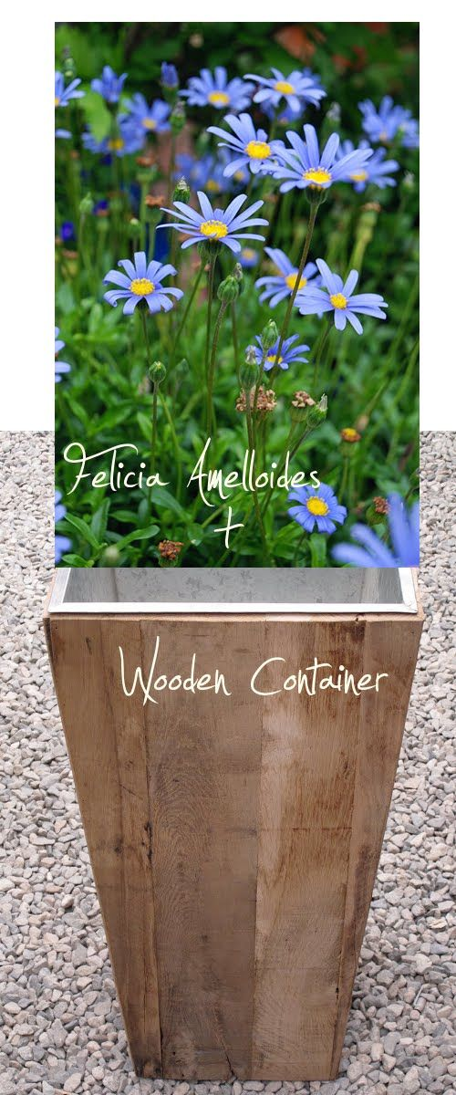 311 best Container Gardens images on Pinterest Landscaping, Pots - container garden design ideas
