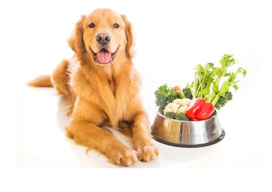 Can You Give Your Dog Raw Vegetables