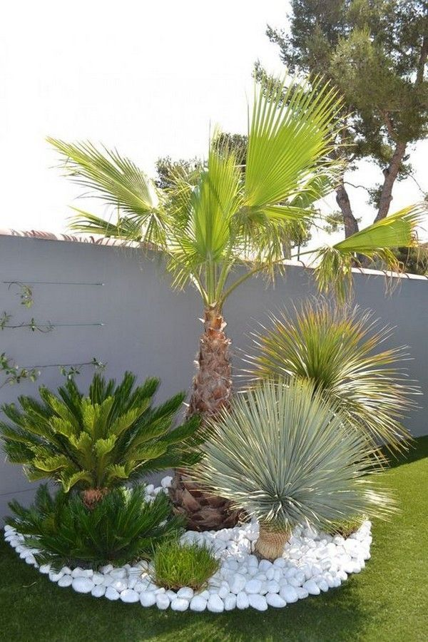 16 Wundervolle Dekorationsideen Aus Weissem Kies Fur Ihren Garten Dekorations Palmen Garten Moderner Garten Gartendekoration