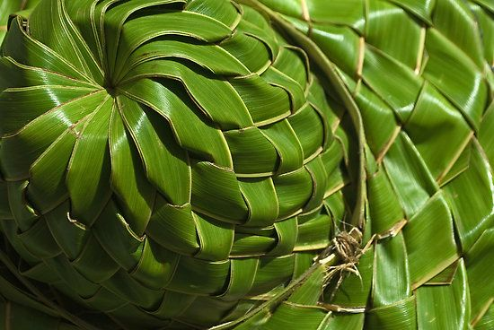 How To Weave A Basket From Banana Leaves : Fresh coconut leaf hat niue and the pacific