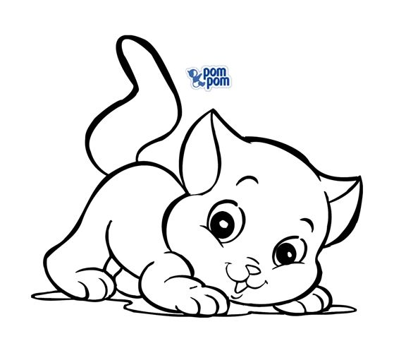 Mejores 110 imágenes de gatitos en Pinterest | Gatitos, Cute kittens ...