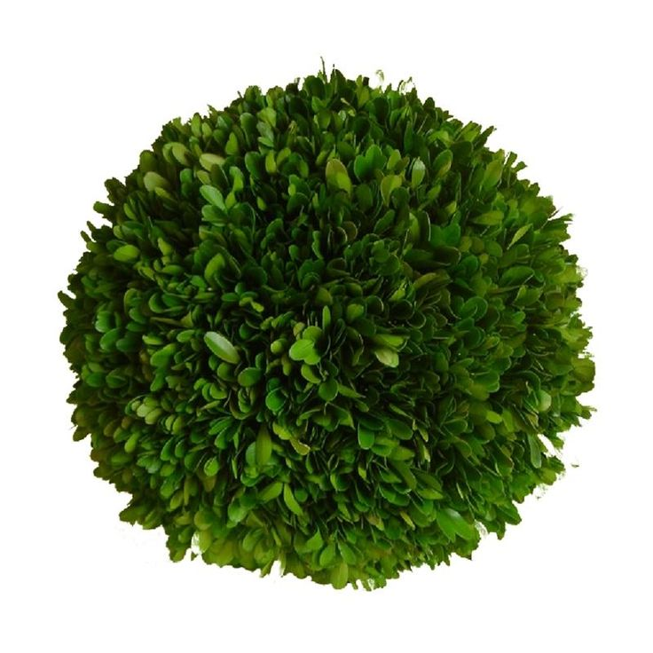 Decorative Boxwood Balls 28 Best Preserved Boxwood Balls Images On Pinterest  Preserved