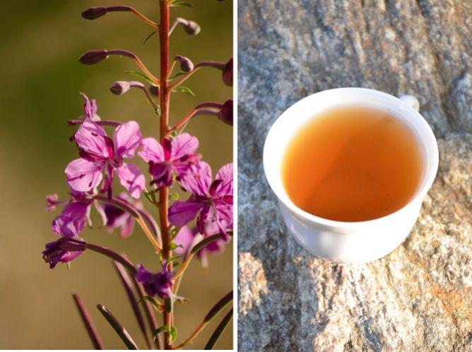 Smak uwielbiany w XIX wieku - rosyjska herbata, russian tea. Anglicy woleli ją od herbaty indyjskiej. Sprawdź, jak smakuje.