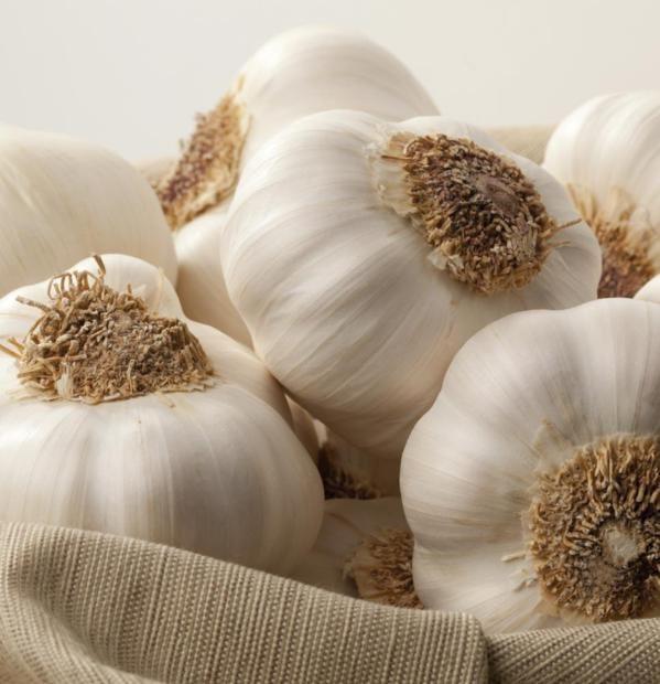 Perché fa bene mangiare aglio crudo e alcuni trucchi per salvaguardare l'alito - Ambiente Bio