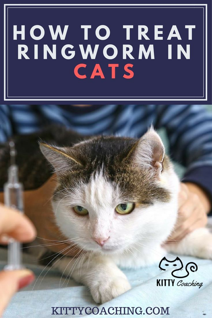 How To Treat Ringworm In Cats 2018 Ringworm In Cats Cat Care
