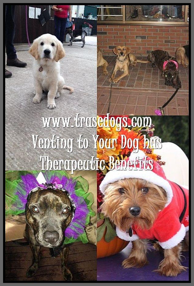 Talking About Dog Dogs Your Dog Best Dog Shampoo