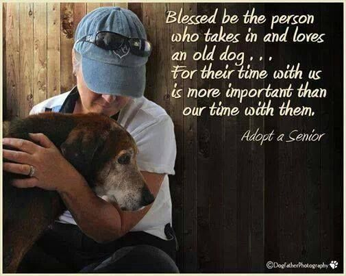 Adopt A Senior Dog Quotes