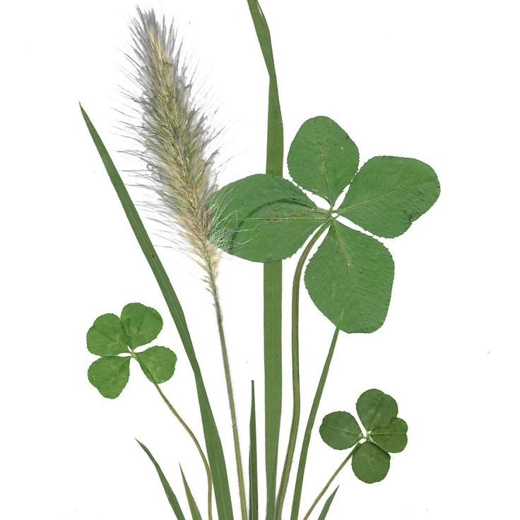 Wish someone good luck with a personal message on this card with 4 leaf clovers.