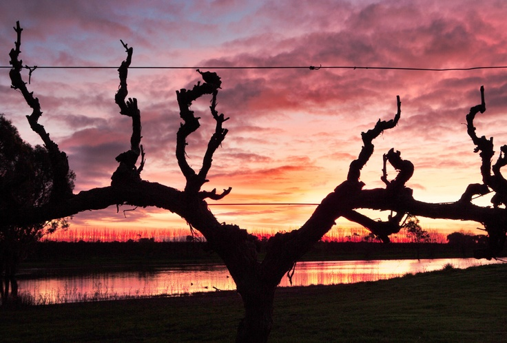 Sunset over the vines..what a view!