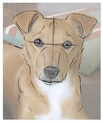 How to sketch your dog from a photo. Ky, maybe this would work on Coda.