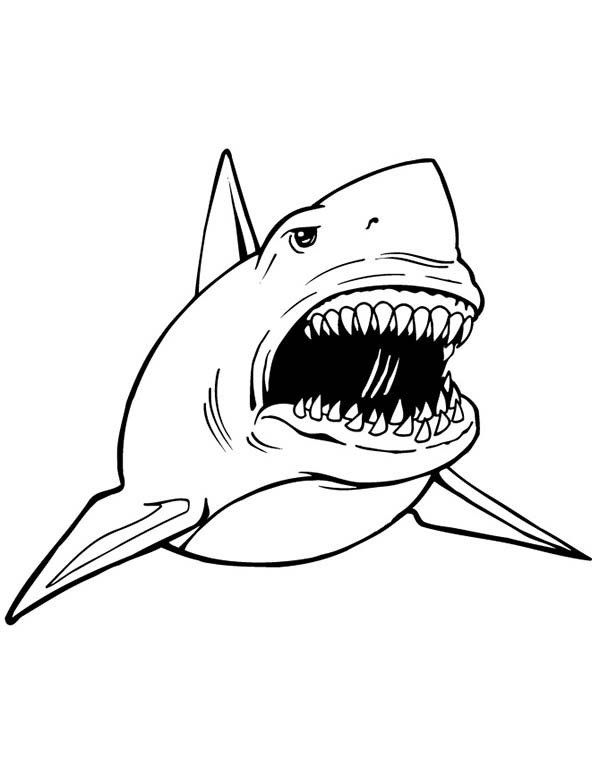 Great White Shark Coloring Pages Great White Shark Coloring Pages Get Coloring Pages In 2020 Shark Coloring Pages Shark Illustration Captain America Coloring Pages